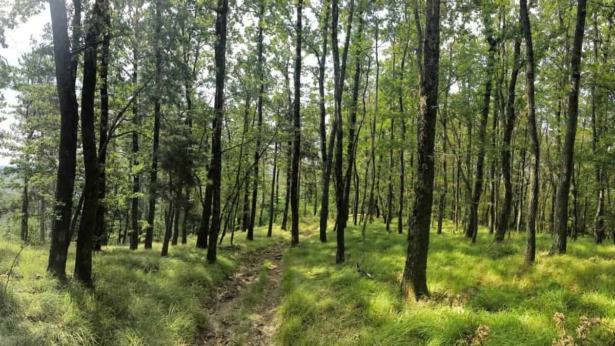 Rundwanderweg Triest Etappe 54 Wanderung durch Laubwald